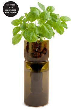 Grow Bottle - Basil   #oldfarmersalmanac