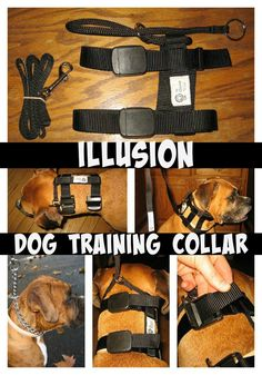 Illusion Dog Training Collar. If you have not heard of the Illusion Dog Collar, you need to read this! It will be like you are walking a brand new dog!
