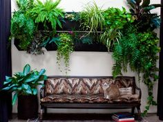 Reno Tips: The Art of Living Walls « Our Green Home