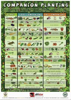 Back To The Basics Choosing Plant Varieties For A Raised Bed Garden - Gardening And Living