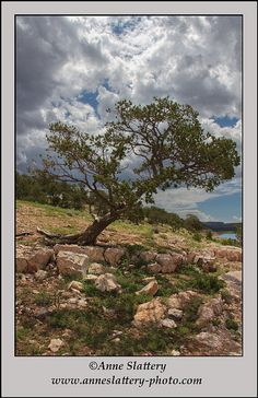 Pinon Pine and clouds, Bluewater Lake State Park, New Mexico by Anne Slattery - IMG_E_67707a | Flickr - Photo Sharing!