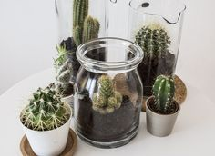 stylish cactus planter from a jar Indoor Garden, Indoor Plants, Ikea Plants, Ikea Jars, Cactus Plante, Decoration Plante, Plants Are Friends, Cactus Decor, Bohemian Chic Decor
