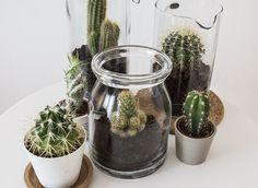 glazen potjes van kringloopwinkel om mn cactussen in te planten