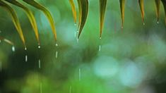 Relaxing music with soft rain that can be described as relaxing piano music, sleep music, peaceful music and romantic music. Instrumental music composed by . Relaxing Rain Sounds, Relaxing Songs, Rain Sounds For Sleeping, Rain Music, Yoga Music, Meditation Music, Bedtime Meditation, Music Guitar, Music Music