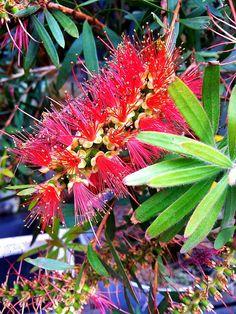 Flower exotic