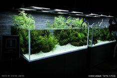 viktorlantos   Takashi Amano - SUMIDA AQUARIUM - display tanks