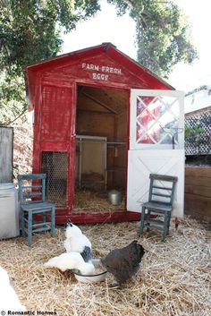 Building A Chicken Coop - Home and Garden: Le design du poulailler ! - Building a chicken coop does not have to be tricky nor does it have to set you back a ton of scratch. Chicken Coop Designs, Easy Chicken Coop, Red Chicken, Chicken Coup, Chicken Life, Chicken Runs, Chicken Barn, Clean Chicken, Chicken Ideas