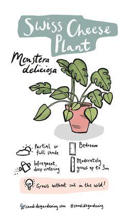 House Plants Decor, Plant Decor, Garden Plants, Indoor Plants, Inside Plants, Cool Plants, Household Plants, Cheese Plant, Plants Are Friends