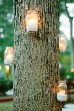 Mason jars attached to trees for pretty lighting.  Don't know how they are fastened.  Driving a nail in the tree seems like it would do damage to the tree. I would use ribbon and\or bale twine.