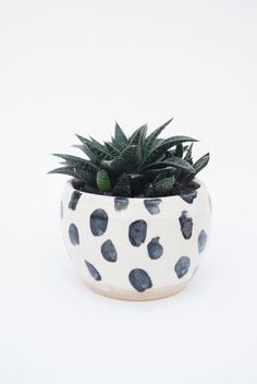 Image of spot pot #1 Green Plants, Air Plants, Potted Plants, Indoor Plants, Indoor Garden, Planting Succulents, Planting Flowers, Cacti And Succulents, Ceramic Planters