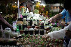 Mini-Cactus Bangkok Trip, Bangkok Travel, Mini Cactus, Hotel Reviews, Table Decorations, Blog, Home Decor, Decoration Home, Room Decor
