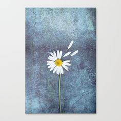 One Daisy,beautiful,beauty,bloom...