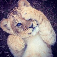 you cant tell me this isnt one of the cutest things ever...