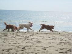 The Atlantic Oceanside Motel located in Dewey Beach, Del., is the perfect getaway for all dog-loving water enthusiasts. With several popular dog-friendly events such as the annual Doodle Romp, you and your pooch will find yourself coming back to Dewey Beach again and again.