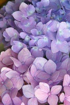 Pastel Purple Flowers Easy Flower Crafts That Anyone Can Do Arts and crafts can be innovative expres Purple Sparkle, Purple Love, Pastel Purple, All Things Purple, Pink Blue, Light Purple Flowers, Purple Colors, Pastel Flowers, Periwinkle