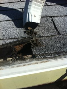 Downspouts should drain directly into gutter below so this doesn't happen.