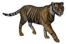 bali tiger - Panthera Trigis Balica