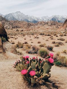 Sand Dunes :: Desert Style :: Cactus Rose :: Boho :: Gypsy Soul :: Bohemian Beauty :: Hippie Spirit :: Free your Wild :: See more Untamed Desert Photography + Fashion Inspiration @untamedorganica