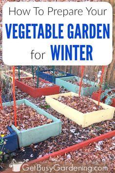 How To Prepare Your Vegetable Garden For Winter - garden landscaping Winter Vegetables, Organic Vegetables, Growing Vegetables, Garden Soil, Garden Beds, Cool Ideas, Covered Garden, Organic Gardening Tips, Vegetable Gardening