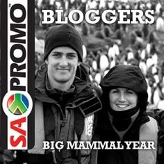 cool The beginnings of The Big Mammal Year Imagine trekking through remote Himalayan mountains in search of the near-mythical snow leopard. Or searching for one of the less than forty surviving Gilbert's Potoroo in Western Australia. https://www.sapromo.com/south-africans-abroad-2/1235