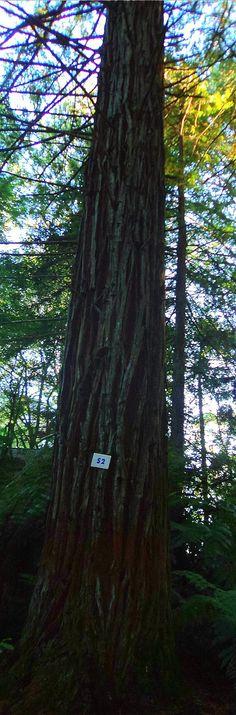 Parque das Sequoias, Canela ~ RS