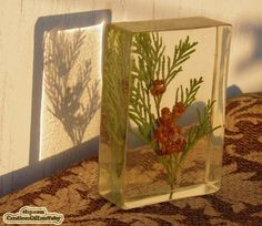 Sprig Of Thuja Paperweight - Natural Plant Glass Paperweight Home Decor Office…