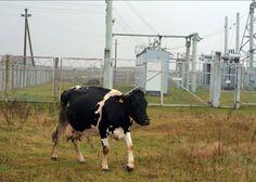 Marja-Elina Uusitupa: Electrical Landscape: Lithuania, Baltoji Voke