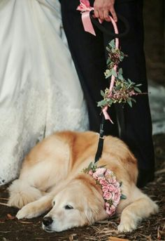 Including all your loved ones at your wedding! #dog #wedding #photo