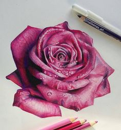 Lila Rosenzeichnungen - Jason Floyd DIY and Art 3d Drawings, Realistic Drawings, Colorful Drawings, Pencil Drawings, Colored Pencil Artwork, Color Pencil Art, Colored Pencils, Pencil Painting, Art Floral