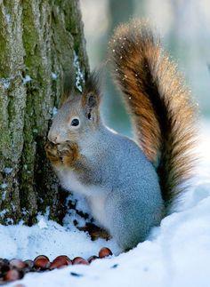 Nur gut, daß ich  einen Futtergeber habe. Bei diesem Schnee finde ich nämlich meine Vorräte nicht mehr.