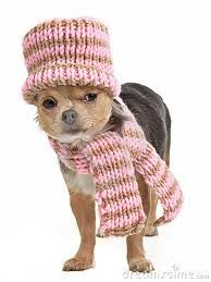 Sweet hat and scarf set♥ Yuppypup.co.uk provides the fashion conscious with stylish clothes for their dogs. Luxury dog clothes and latest season trends, Dog Carriers and Doggy Bling. Next Day Delivery. Please go to http://www.yuppypup.co.uk/