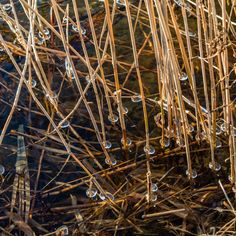 End of the winter, ice forms around the river's vegetation by Petras Paulauskas Display Advertising, Print Advertising, Marketing And Advertising, Retail Merchandising, Us Images, Print Pictures, Winter White, Abstract Backgrounds