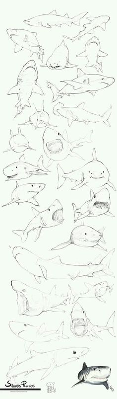 New Drawing Bleistift Tattoo 67 Ideas Doodle Drawing, Drawing Sketches, Painting & Drawing, Shark Drawing, Animal Sketches, Animal Drawings, Art Drawings, Drawings Of Sharks, Shark Tattoos