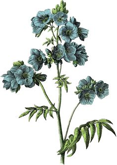 The Graphics Fairy: blue flowers More