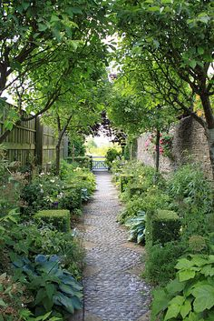 Long & narrow shade garden