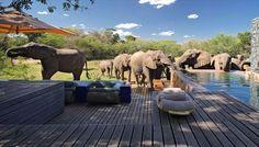 「南アフリカ ラグジュアリー」の画像検索結果