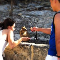 This photo shows exactly what you shouldn't do: tease a quokka with an icecream while waving a selfie stick in it's face  If you see this happening on Rottnest this weekend be that guy. Tell these people this is NOT how we should treat our wildlife. #fortheloveofquokkas #rottnest #quokka #quokkas #rotto #rottnestisland #quokkaselfie #stopthequokkaselfie #donoharm #lovethyquokka #letthemlivenaturally #animalcare #australia #wa #thisiswa #westernaustralia #amazing_wa #happyperth #ICWest…
