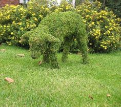 Lamb Mossed & Planted Topiary frame :: Gardening Delights Recycling, Sustainable and the Rather Unusual