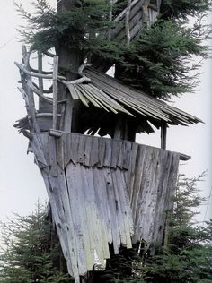 tree house at the beach!