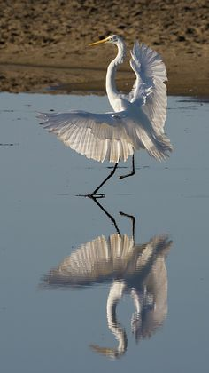 A One-footed Egret Alights https://www.facebook.com/bruce.frye.photography/