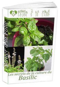 Faire pousser des salades en pot sur son balcon tuto jardinage pot balcon salade - Comment faire pousser du basilic ...