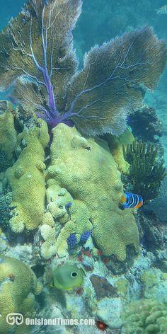 The Virgin Islands National Park Underwater Snorkeling Trail at Trunk Bay Beach on Saint John, USVI. Jamaica, Barbados, Bolivia, Virgin Islands National Park, Honduras, Johns Island, Puerto Rico, Equador, Sea To Shining Sea