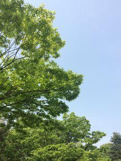 아침운동하면서 2014_5_2 날씨 오월은 정말 푸르다 이쁘다 하늘도 파랗고 나무도 푸르다 엄마랑 싸우지 말자