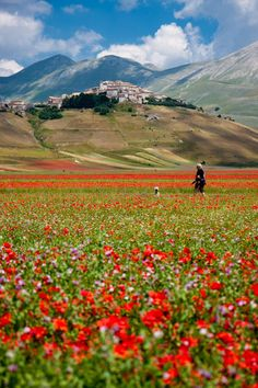 Wild Flowers Inspiration : Flowering in Castelluccio, Umbria - Italy - Flowers.tn - Leading Flowers Magazine, Daily Beautiful flowers for all occasions Umbria Italia, Toscana Italia, Places To Travel, Places To See, Beautiful World, Beautiful Places, Empire Romain, Visit Italy, Cinque Terre