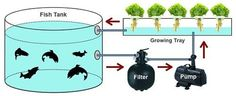 Aquaponics how to at http://diyaquaponicshowto.info/ - Google Image Result for http://2.bp.blogspot.com/-m-9qqgEO23o/TahVLEb-jlI/AAAAAAAADhY/eTkxXNgVRtE/s1600/aquaponics%2Bsystem.jpg
