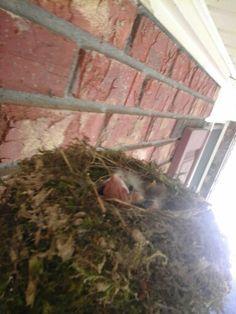 Baby birds i found on top of my motion sensor