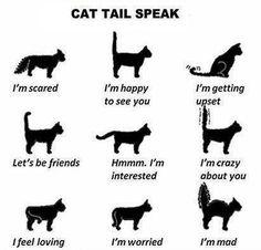 Cat Tail Speaks