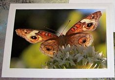 Under the Flutterby Photo Greeting Card  by KindredSpiritImages