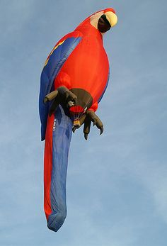 Look closely.... OMG it's a Parrot hot-air balloon! Amazing!!!