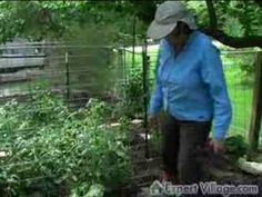 How to Raise Organic Vegetables : Organic Gardening Tips - http://news.gardencentreshopping.co.uk/garden-furniture/how-to-raise-organic-vegetables-organic-gardening-tips/